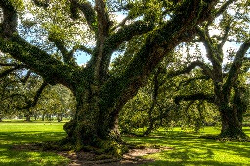 oak-alley-plantation-1647284__340